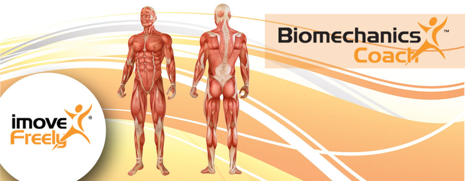 biomechanics_banner